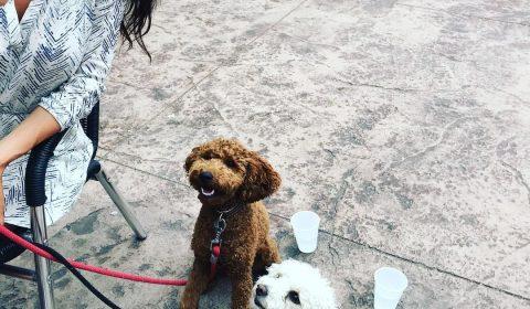west-street-market-dog-friendly-patio